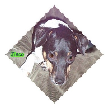 Jinco (Aka Stinko)